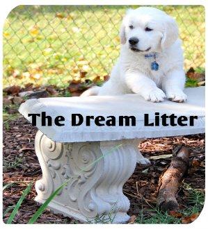 dreamlitter