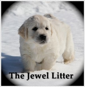 jewellitter2
