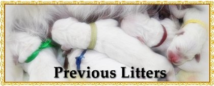 previouslitters